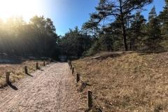 Weg im umliegenden Wald